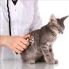 Ветеринарные клиники в Милютинской